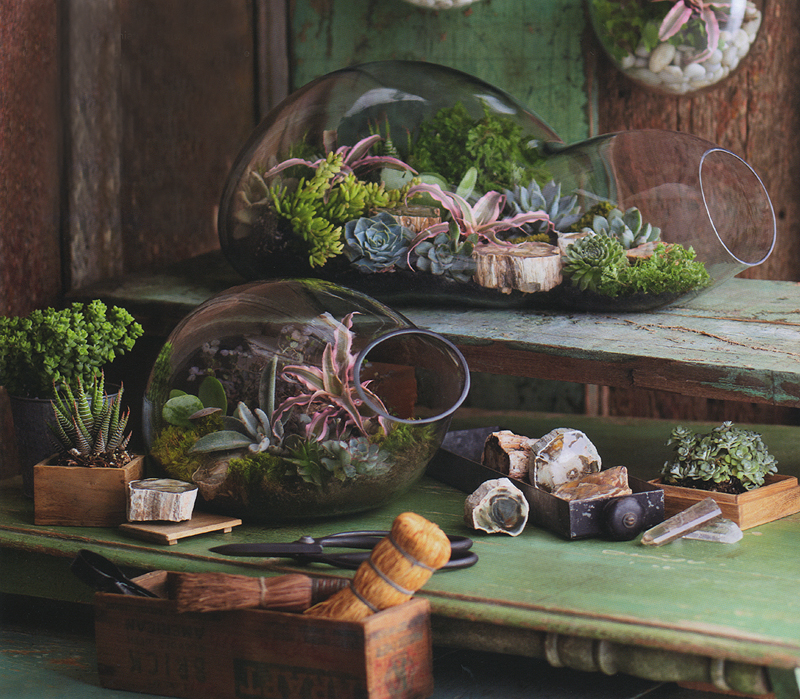 Decor bubble glass modern terrarium indoor garden planter for Indoor gardening glasses