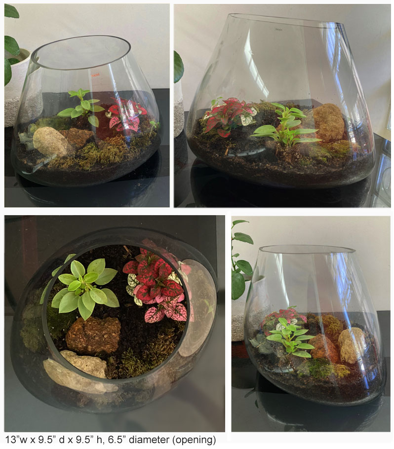 modern glass terrarium indoor garden planter click to view additional images